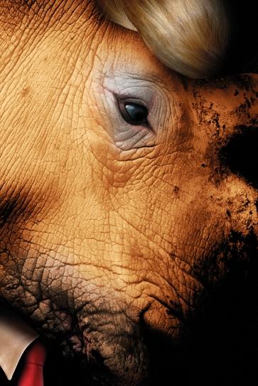 Rhinoceros © Christophe Cotichelli (photography), adapted by Edinburgh International Festival.jpg
