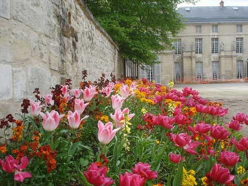 Tulips-at-Malmaison.jpg